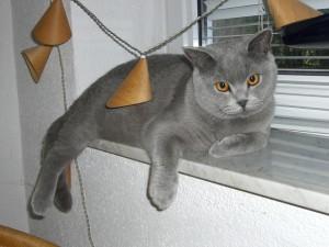 Kot na parapecie z kamienia