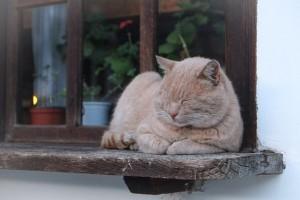 Kot na ciepłym parapecie