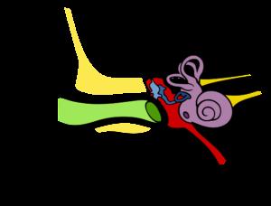 Laryngolog