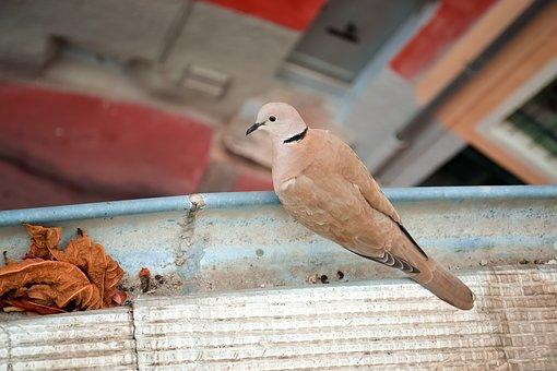 siatka przeciw ptakom