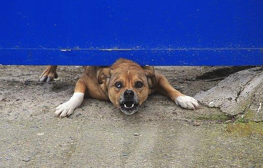 odszkodowanie za pogryzienie przez psa z oc rolnika